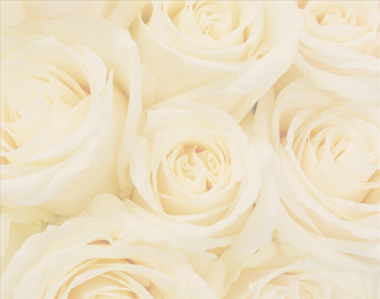 Amazing White Roses Wedding 1280 x 1007 · 58 kB · jpeg